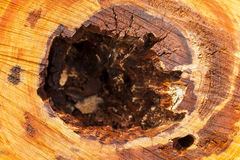 Cut Tree Stump. A closeup of a cut tree stump Royalty Free Stock Photo