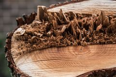 A cut tree stump reveals the secrets within stock photography
