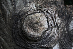 Cut tree stump Stock Photo