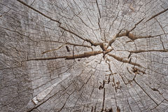 Cut Tree Stump Royalty Free Stock Images