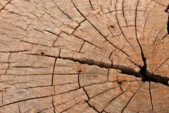 Cut tree.  Stump Royalty Free Stock Photo