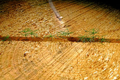 Cut tree texture Royalty Free Stock Images