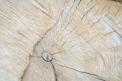 Cut tree. The texture of rough cut pine tree Stock Photo