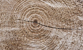 Cut tree texture Stock Photography