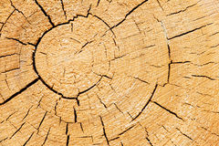 Cut tree trunk Royalty Free Stock Image