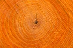 A cut of a tree trunk with annual rings. Alder with natural orange wood color stock images