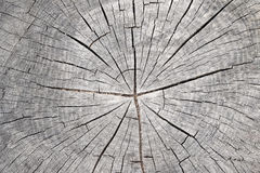 Cut tree trunk - annular rings. Detail of the cut tree trunk - annular rings Stock Images