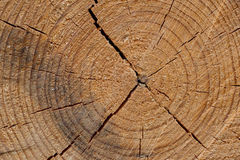 Cut tree trunk background. Close up wooden cut texture Stock Photo