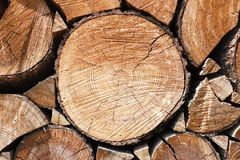 Cut tree trunk Stock Photos
