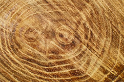 Cut tree trunk Royalty Free Stock Images