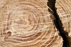 Cut tree trunk Stock Photos