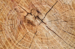Cut tree trunk Stock Photography