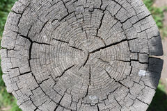 Cut tree trunk. Dry trunk of a cut tree with cracks from above Stock Photography