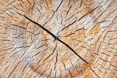 A cut of the tree trunk giving a good view of the concentric year of the ring. stock image