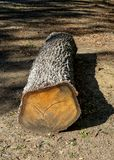 Cut tree trunk lying on the ground with shadow. National park object royalty free stock photos