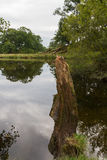 Cut tree trunk in pond in Ambleside countryside, Cumbria, UK. Cut tree trunk in a pond in the countryside of Ambleside in Cumbria, UK Royalty Free Stock Images