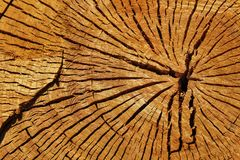 Cut tree trunk ring texture. In the forest Stock Photos