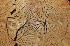 Cut tree trunk ring texture. In the forest Stock Photo