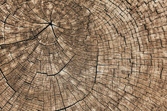 Cut tree trunk Stock Image