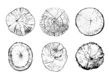 Cut tree trunks with circular rings. Set of cut tree trunks with circular rings isolated on white background. Textures of wood logs. Black and white vector royalty free illustration