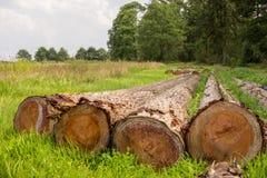 Cut tree trunks in field Stock Photos