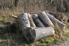 Cut tree trunks heating Royalty Free Stock Photo