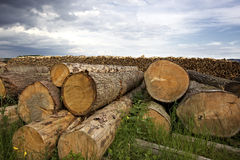 Cut tree trunks lying on ground Stock Photos