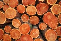Cut tree trunks Royalty Free Stock Photo