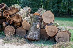 Cut Tree Trunks Stock Images