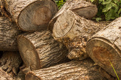 Cut tree wood Stock Photos
