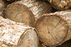 Cut tree wood Stock Photography