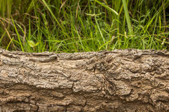 Cut tree wood Royalty Free Stock Photography