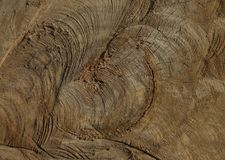 Cut tree in the woods by poachers for firewood. Photo of a sawn wood on a fire by poachers in a dark thicket of the forest a texture suitable for the background stock images
