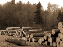 Cut Trees. By forest in sepia tone stock photography