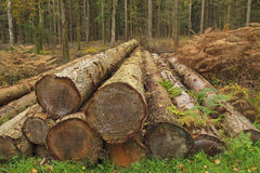 Cut Trees Stock Photo