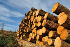 Cut trees Royalty Free Stock Photography