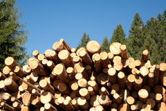 Cut trees Royalty Free Stock Photos