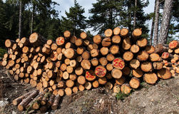 Cut trees Stock Photography