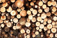 Cut trees Royalty Free Stock Photo