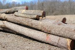 Cut trees awaiting shipment. Royalty Free Stock Photos