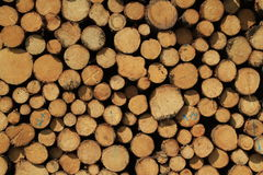 Cut trees background Royalty Free Stock Images