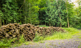 Cut Trees. Close up of trees piled up in the woods. Ready to be transported for manufacturing or fire wood Royalty Free Stock Photography