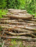 Cut Trees. Close up of trees piled up in the woods. Ready to be transported for manufacturing or fire wood Royalty Free Stock Photo