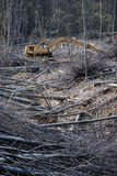 Cut trees in a forest. Excavator remove cut tree in a forest, Liguria, Italy Royalty Free Stock Image