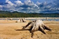 Cut trees in high Sierras, California. Cut trees in high Sierras, California Royalty Free Stock Photography