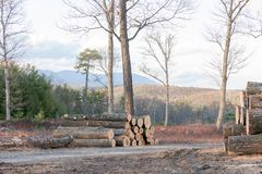 Cut Trees on a Mountain Top in Upstate New York, ready for the Saw Mill. Cut and Stacked Trees ready to be made into lumber, on a Mountain Top in Upstate New Stock Photography