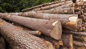 The cut trees Royalty Free Stock Image