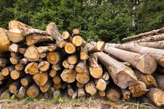 The cut trees Royalty Free Stock Photo
