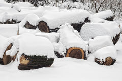 Cut trees in snow Stock Image