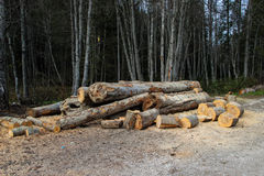 Cut Trees. Cut tree trunks and wooden logs at the edge of the forest Stock Image